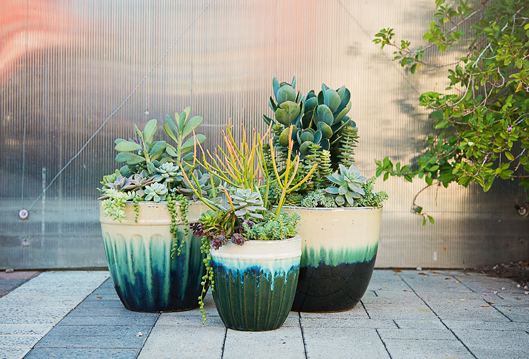 Containers – Plant Depot